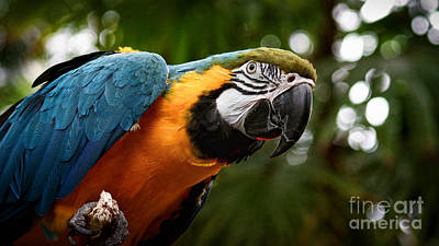 Photograph - Art Macaw by Cameron Wood