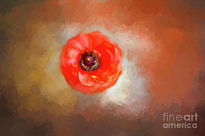 Photograph - Art Of The Flower by Darren Fisher