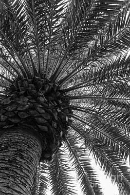 Photograph - Art Of The Palm Tree Grayscale by Jennifer White