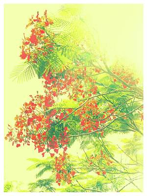 Beaches And Waves Rights Managed Images - Art of the Poinciana Royalty-Free Image by Gary Richards