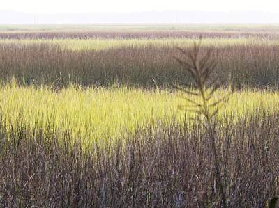 Art Of The Southern Marshland Art Print by Jan Gelders
