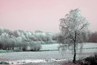 Photograph - Art Print Winterland 11 by Harry Gruenert