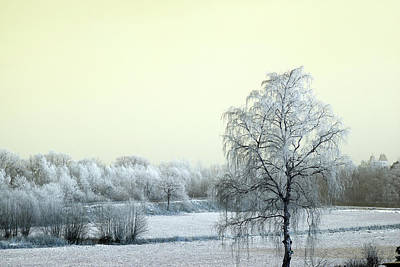 Photograph - Art Print Winterland 14 by Harry Gruenert