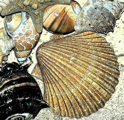 Art Shell 2 Art Print by Stephanie Troxell