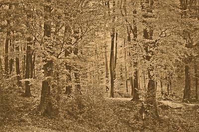 Art - Walk Into Vintage Woods Art Print