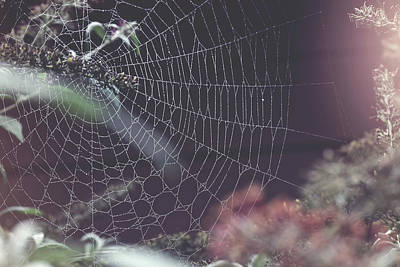 Photograph - Artful Spider by Kay Jantzi