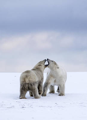 Photograph - Artic Antics by Cheryl Strahl