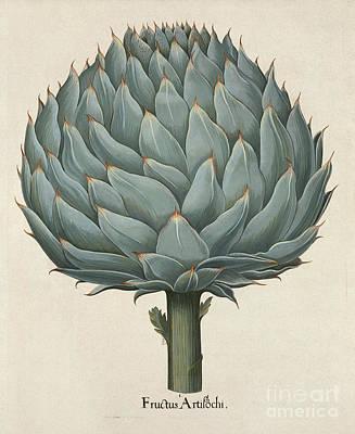 Artichoke Digital Art - Artichoke Botanical Illustration by Alexandr Testudo
