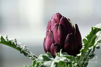 Photograph - Artichoke Family by Cindy Manero