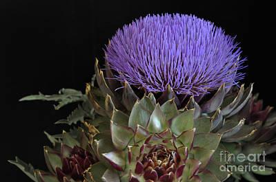 Photograph - Artichoke Flower by Debby Pueschel