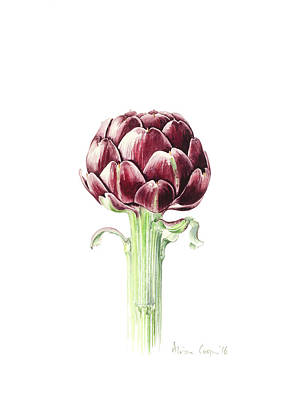 Artichoke Drawing - Artichoke From Roman Market by Alison Cooper