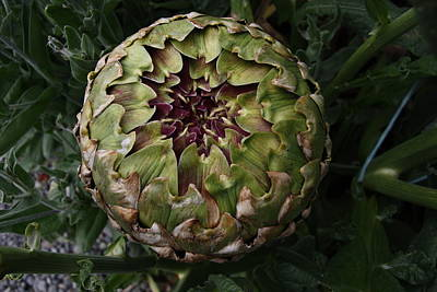 Photograph - Artichoke Head by Nareeta Martin