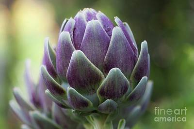 Photograph - Artichoke In Eggplant Purple by Ruth Jolly