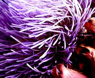 Photograph - Artichoke Macro by VIVA Anderson