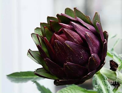 Photograph - Artichoke Relative by Cindy Manero