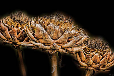 Photograph - Artichokes Heads by Dee Browning