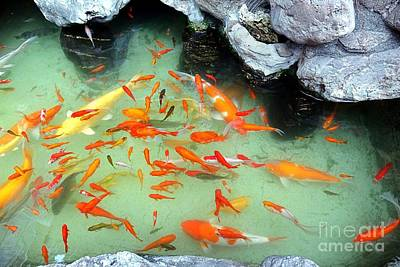 Photograph - Artificial Pond With Colorful Goldfish by Yali Shi