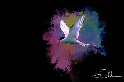 Digital Art - Artistic Arctic Tern by Gloria Anderson
