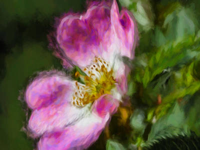 Photograph - Artistic Dogrose 2 by Leif Sohlman