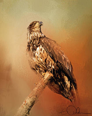 Digital Art - Artistic Eagle On A Branch by Gloria Anderson