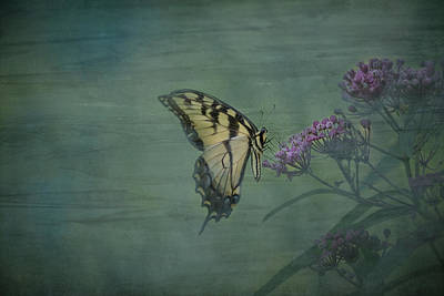 Photograph - Artistic Eastern Tiger Swallowtail 2017-1 by Thomas Young