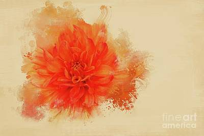 Photograph - Artistic Orange Dahlia by Eva Lechner