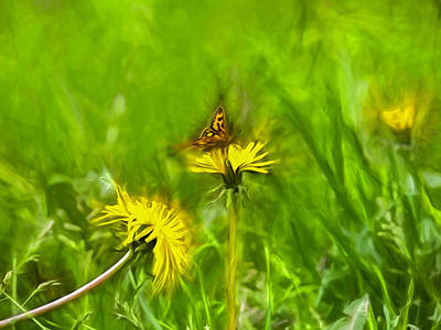 Photograph - Artistic Painterly Butterfly 1 On Dandelion by Leif Sohlman