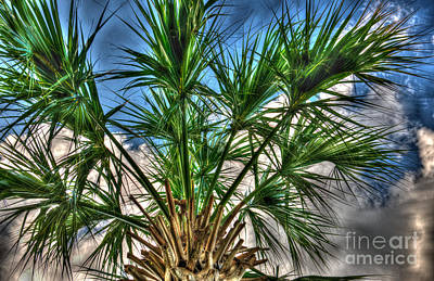 Photograph - Artistic Palmetto Sky by Dale Powell