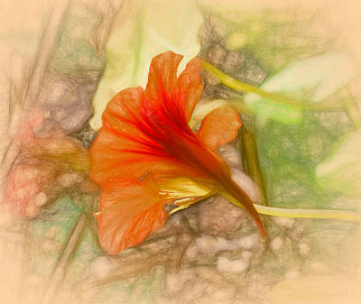 Photograph - Artistic Red And Orange by Leif Sohlman