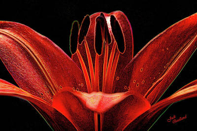 Photograph - Artistic Red Pixie Asiatic Lily by Judi Quelland
