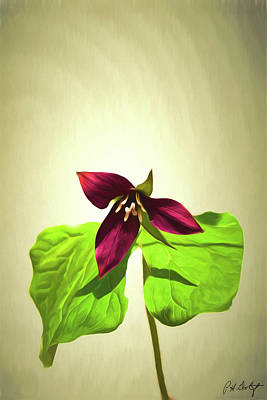 Red Trillium Photograph - Artistic Red Trillium by Phill Doherty