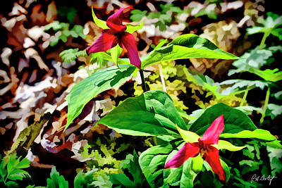 Trillium S Photograph - Artistic Red Trilliums by Phill Doherty