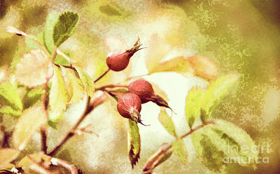 Artistic Rose Hips Art Print by Wendy Elliott