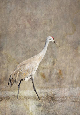 Bath Time Rights Managed Images - Artistic Sandhill Crane 2014-1 Royalty-Free Image by Thomas Young