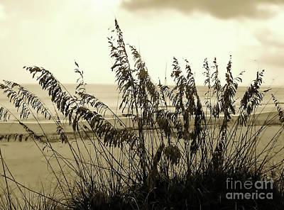 Photograph - Artistic - Sea - Oats by D Hackett