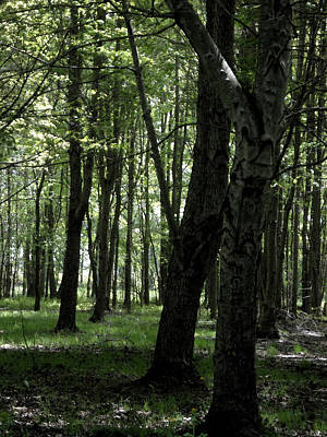 Artistic Tree Original