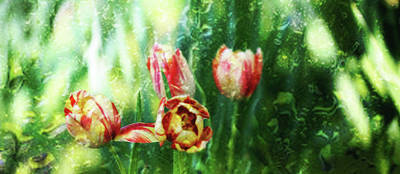Photograph - Artistic Tulips by Toni Hopper