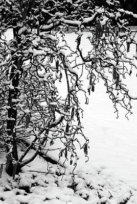 Photograph - Artistic Winter Tree by Margie Avellino