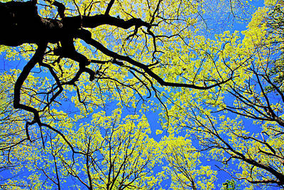 Photograph - Artsy Tree Canopy Series, Early Spring - # 03 by The American Shutterbug Society