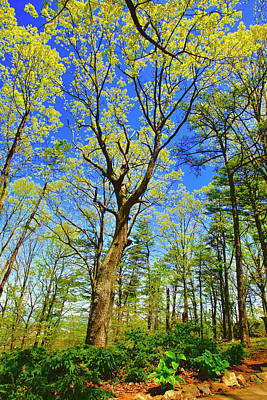 Photograph - Artsy Tree Series, Early Spring - # 04 by The American Shutterbug Society
