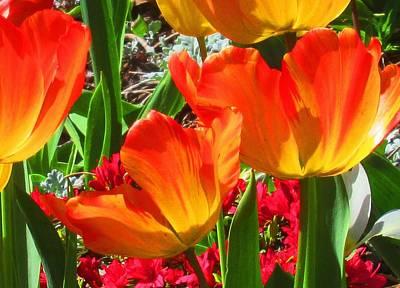 Photograph - Artsy Tulips by Karen Molenaar Terrell