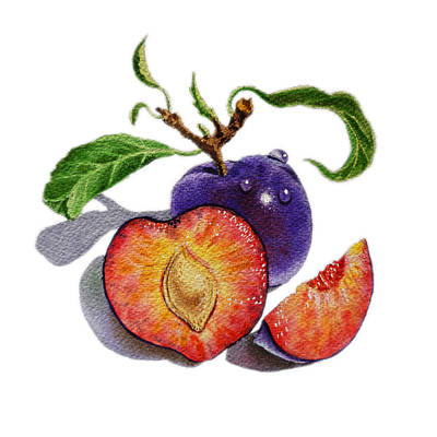 Free Painting - Artz Vitamins The Heart Of A Plums by Irina Sztukowski