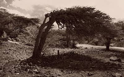 Photograph - Aruba Landscape by Jim Vance