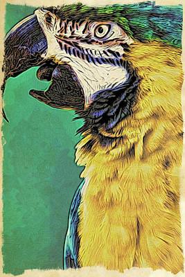 Photograph - Aruba Yellow by Alice Gipson