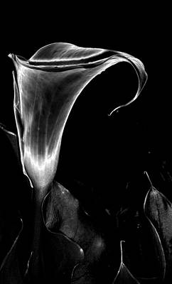 Arum Art Print by Vah Pall