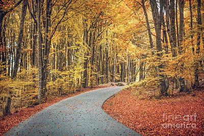 Emo Photograph - As Autumn Falls by Evelina Kremsdorf