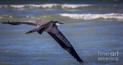 Sea Birds Photograph - As Easy As This by Marvin Spates
