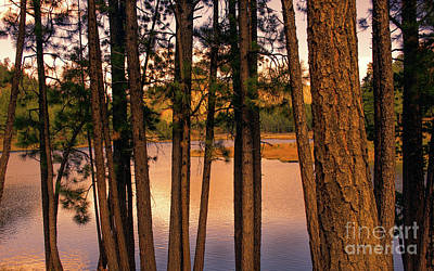 Photograph - Evening On The Lake by Susan Warren