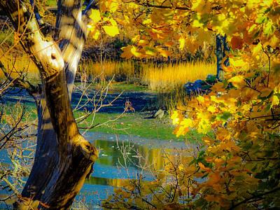 Photograph - As Fall Leaves by Glenn Feron