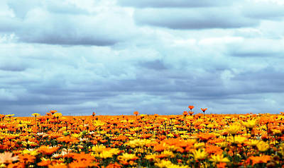 Photograph - As Far As The Eye Can See by Rebecca Cozart